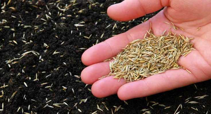 Does Grass Seed Go Bad: How Long Does Grass Seed Last?
