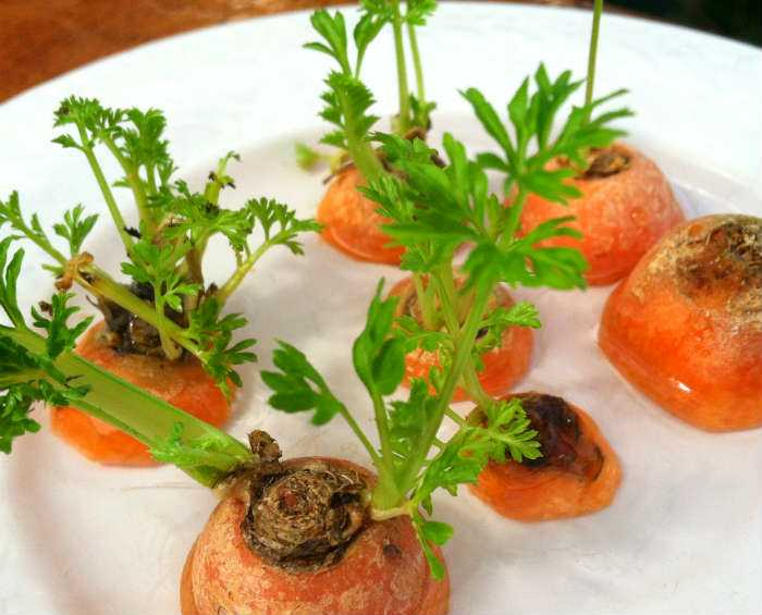 Grow multiple carrot plants from tops