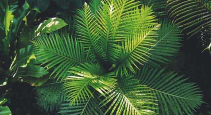 Ferns: A Guide to Growing and Caring for Ferns
