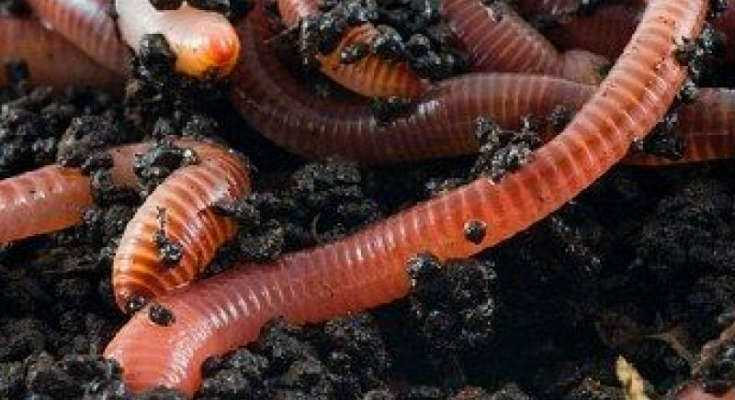 Worm Farm - Composting Guide with Worms