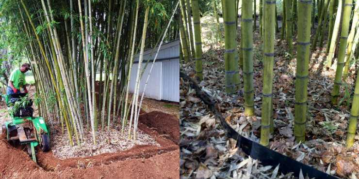 Bamboo Root Barrier How To