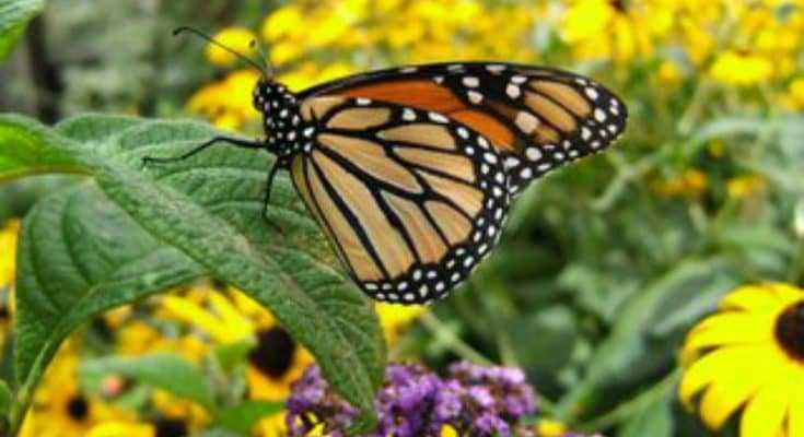 Planting a Pollinator Garden to Attract Bees and Butterflies