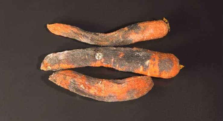 Rotten Carrots - How to Tell if Carrots gone bad?