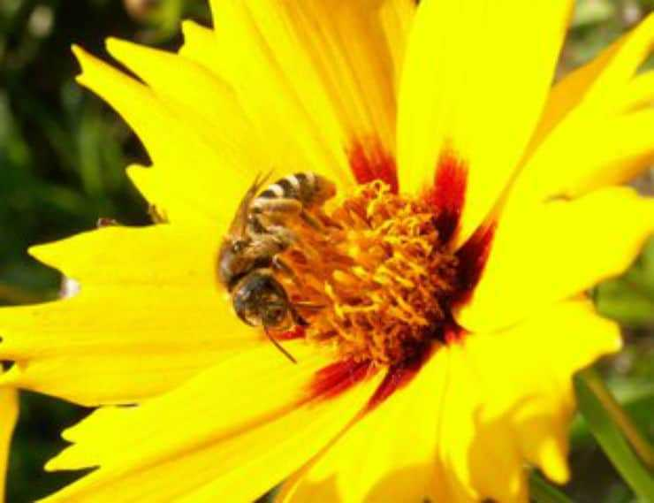 Why Are Bees So Important as Pollinators?