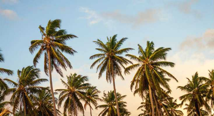 Epsom Salt for Palm Trees: Is it Good for Plants?