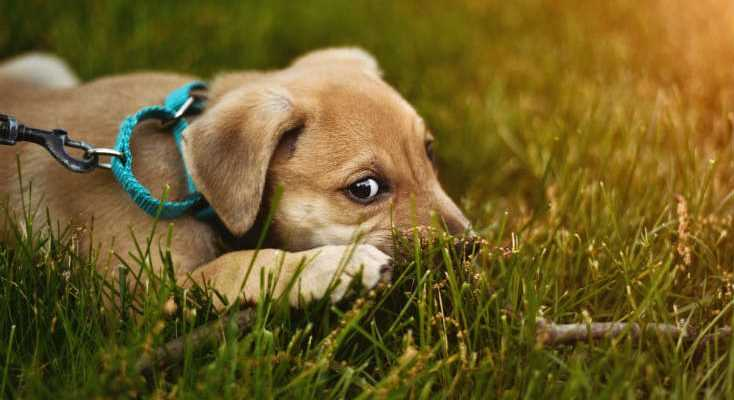 Best Grass For Dogs: The Pet Friendly Grass Seed